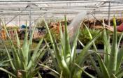 Zorgkwekerij Bloemenhof: plantenkas
